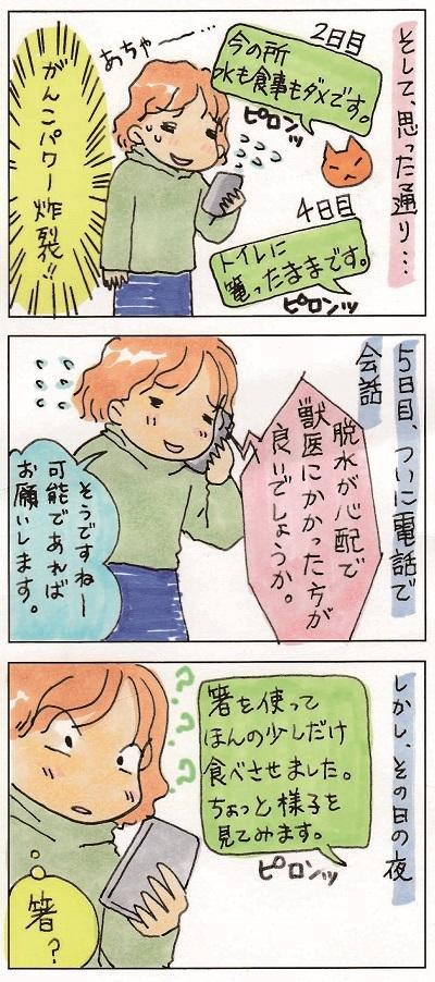 コテちゃんトライアル 2-3