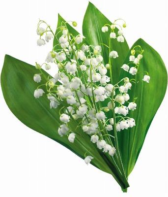 flower4928.jpg