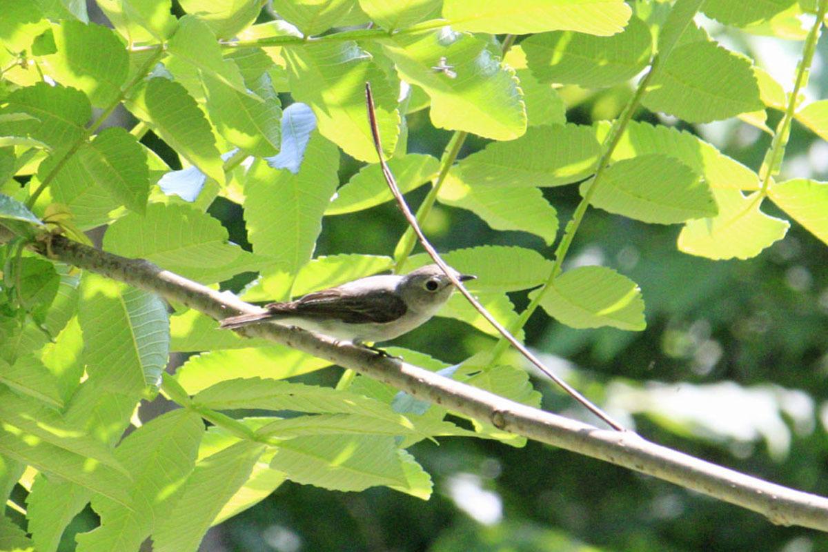 170529hurusatobird4b.jpg