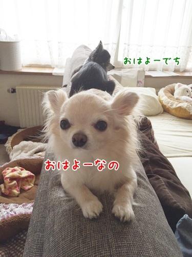 IMG_0446.jpg