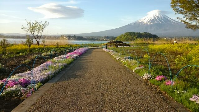 花街道 富士山