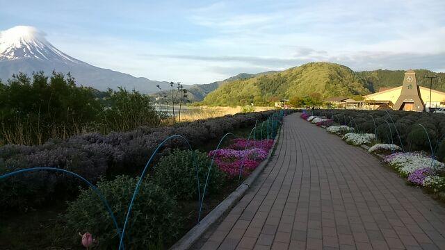 歩道と富士山 遠方
