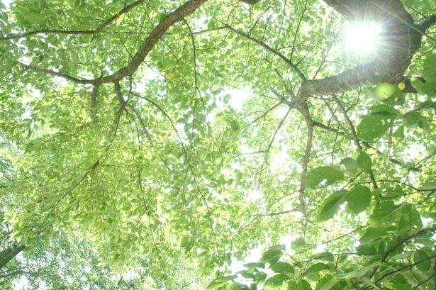 ヒプノセラピー スピリチュアルライフ 木の光