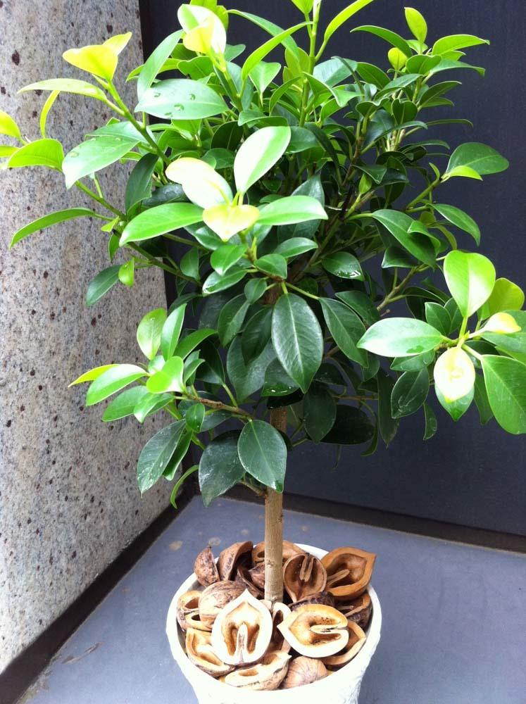 plants20170628a2.jpg