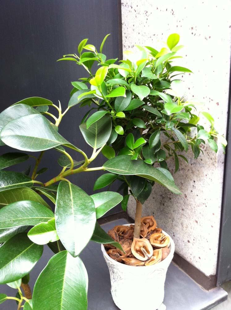 plants20170628a3.jpg