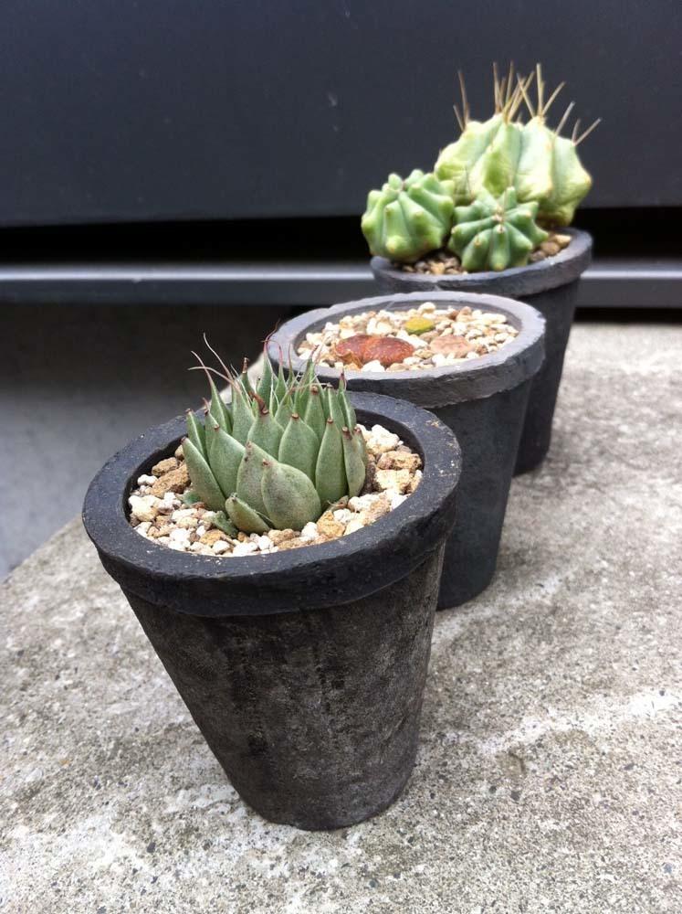 succulent20170607a1.jpg