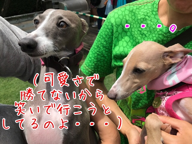 fc2blog_20170531152013f93.jpg