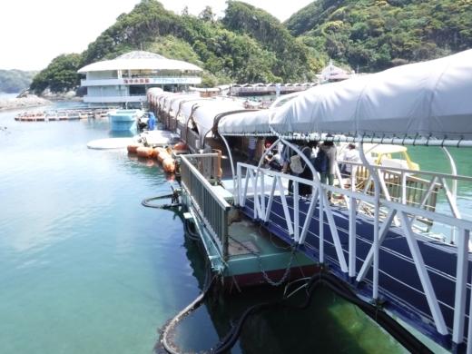 下田海中水族館 (5)
