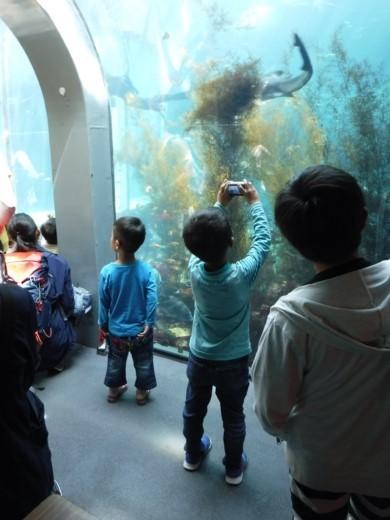下田海中水族館 (12)