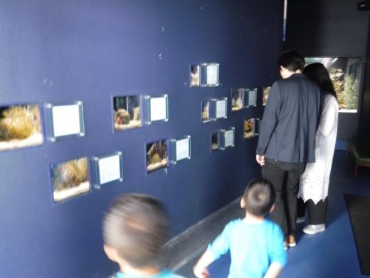 下田海中水族館 (15)