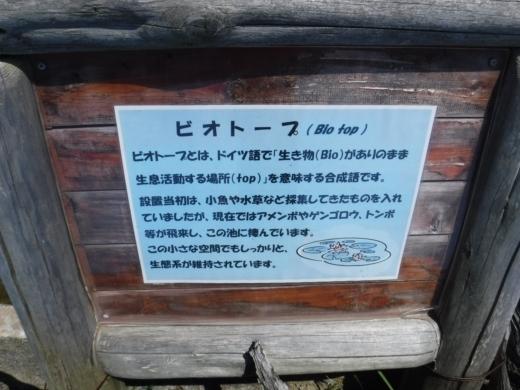 下田海中水族館 (29)