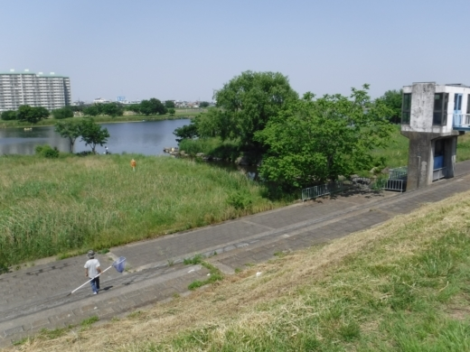 多摩川登戸釣り (9)