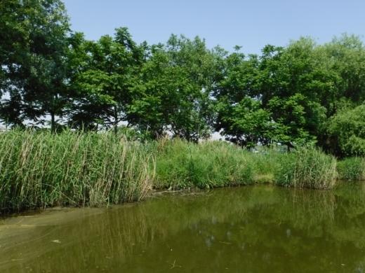 多摩川登戸釣り (14)