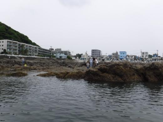 葉山の釣り (11)