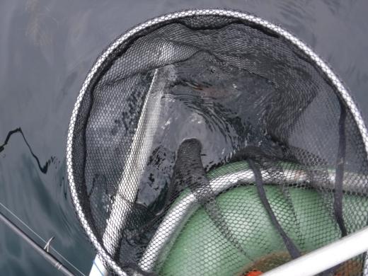 葉山の釣り (42)