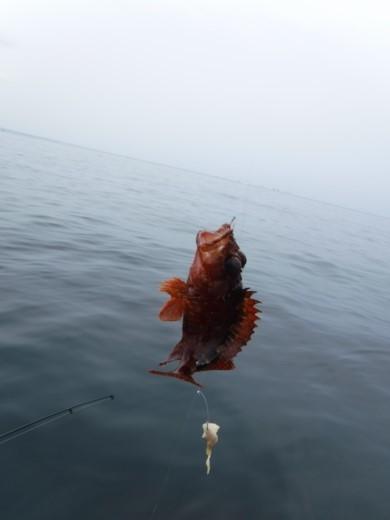 葉山の釣り (43)