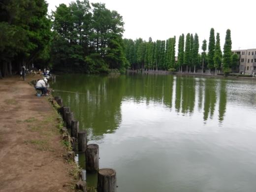 別所沼公園雑魚釣り (6)