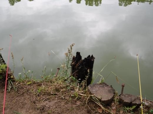 別所沼公園雑魚釣り (13)
