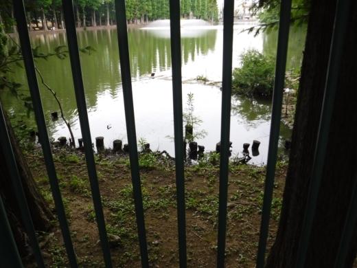 別所沼公園雑魚釣り (25)