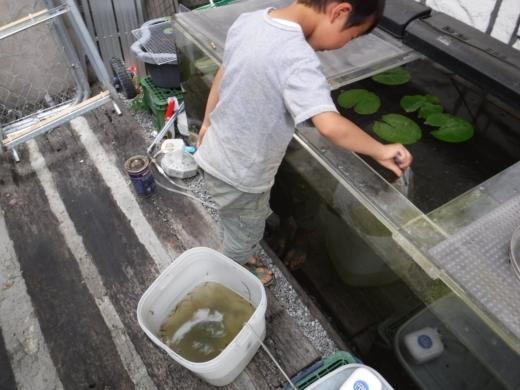 別所沼公園雑魚釣り (31)