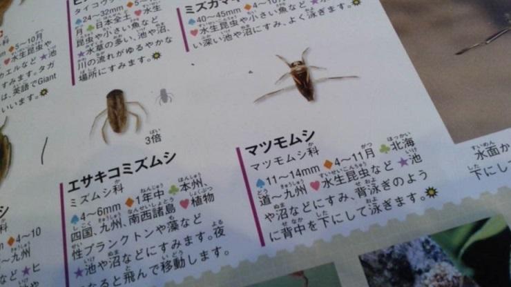 みさと公園 (1)