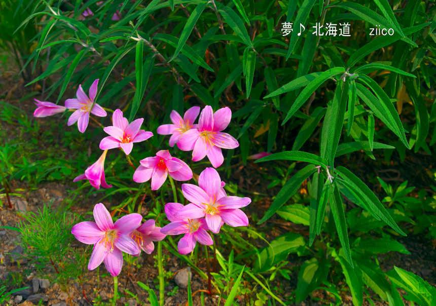 9-K5S_2666.jpg