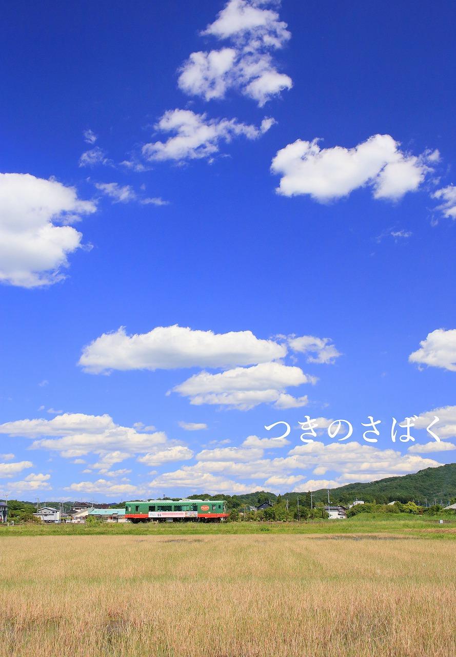 IMG_4726fautokido_1.jpg