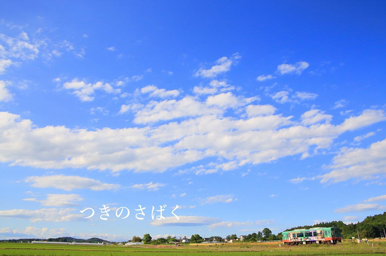 IMG_5115kido_1.jpg
