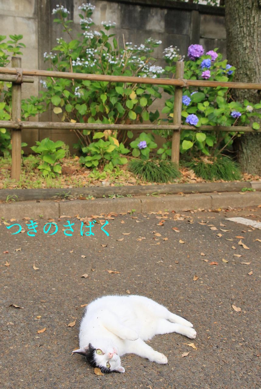 IMG_7024f5100_1.jpg