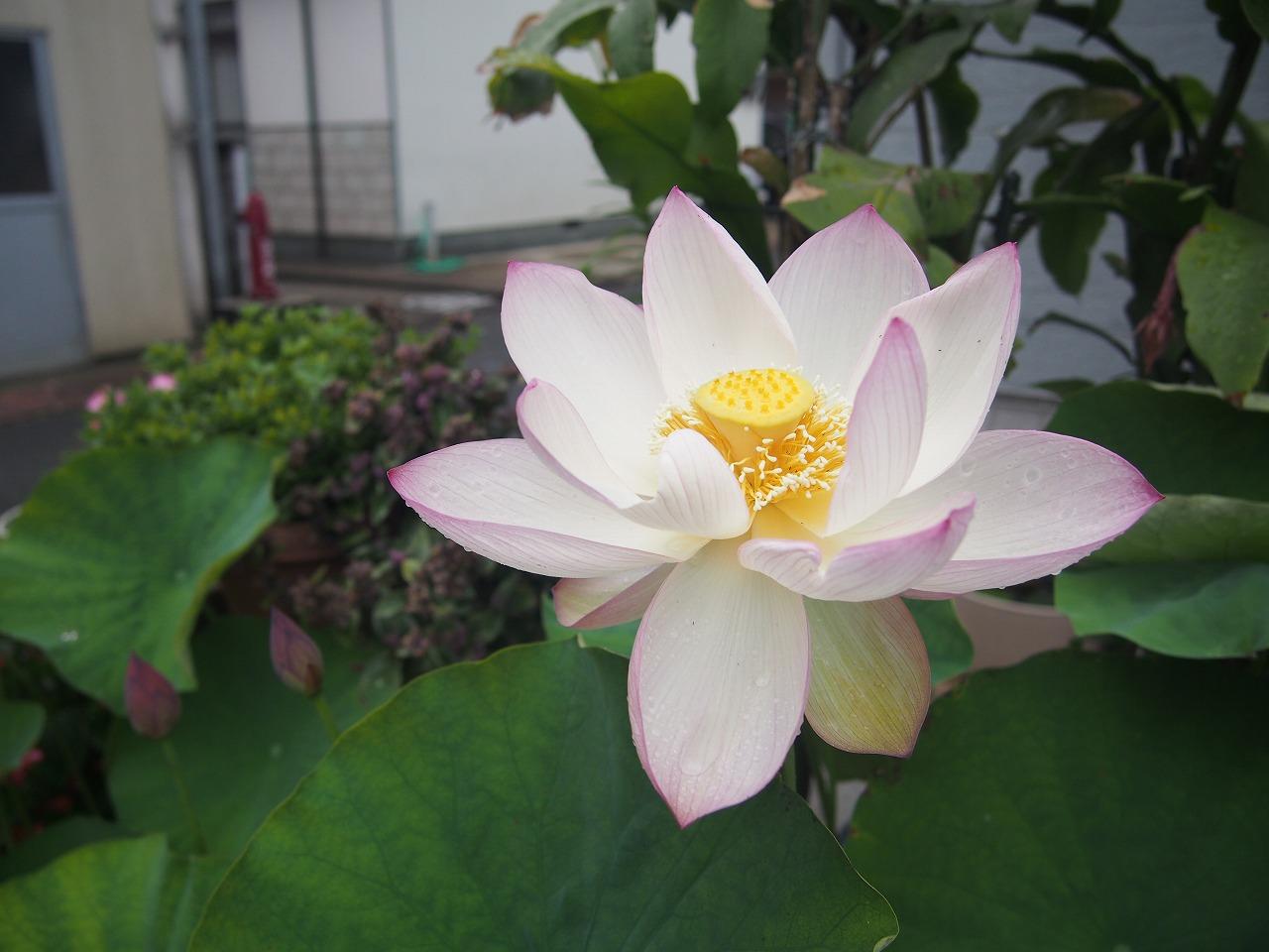 20170630-TsumabeniChawanbasu-O04.jpg