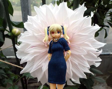 29_05_17_ibaragi_flower_4.jpg