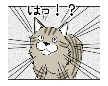 03062017_cat4mini.jpg