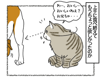 03072017_cat3mini.jpg