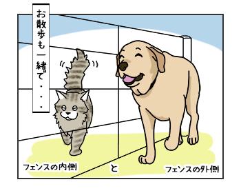 06062017_cat2mini.jpg