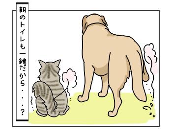 06062017_cat3mini.jpg