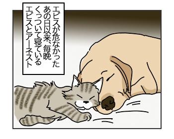 10072017_cat1mini.jpg