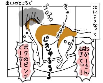 13062017_cat2mini.jpg