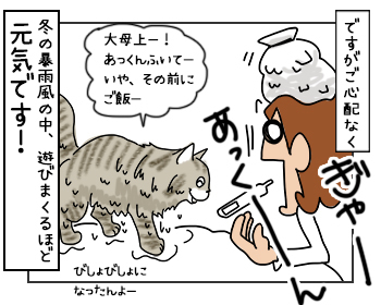 13062017_cat5mini.jpg