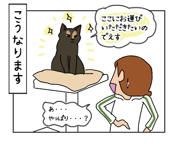 14062017_cat4mini.jpg
