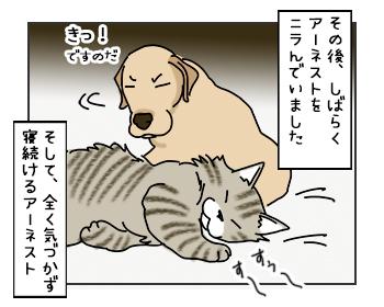 15052017_cat5mini.jpg