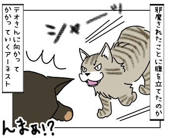17052017_cat2mini.jpg
