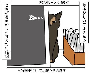 18052017_cat3mini.jpg