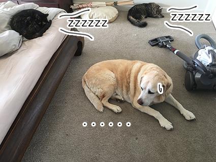20052017_cat2.jpg