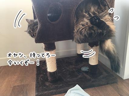 21052017_cat3.jpg