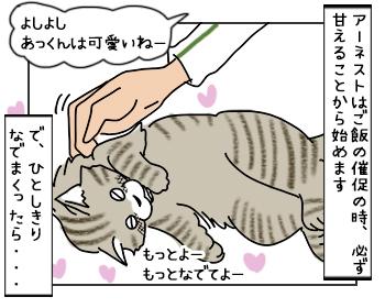 22052017_cat1mini.jpg