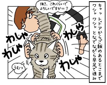 22052017_cat4mini.jpg
