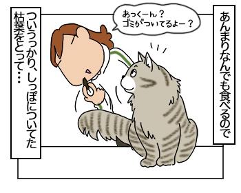 22062017_cat3mini.jpg