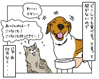 25052017_cat2mini.jpg