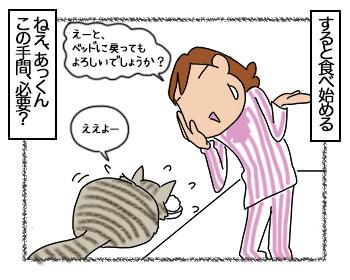 28062017_cat4mini.jpg