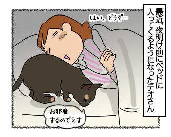 29062017_cat1mini.jpg